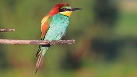 Pájaro hermoso exótico que se sienta en una rama en un día de verano metrajes