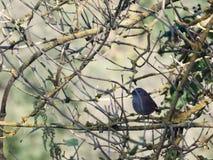 Pájaro hermoso ocultado en ramas en árbol en otoño Imágenes de archivo libres de regalías