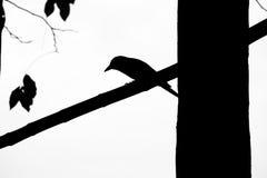 Pájaro horizontal de la silueta en una rama del árbol Imagenes de archivo