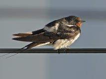 Pájaro i que toma el sol en la rejilla eléctrica Fotografía de archivo