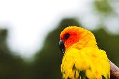 Pájaro imponente Imágenes de archivo libres de regalías