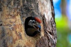 Pájaro joven manchado de la pulsación de corriente fotos de archivo