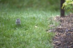 Pájaro - Junko Imagen de archivo libre de regalías
