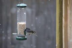 Pájaro - Junko Imagen de archivo