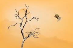 Pájaro la Florida de la paz (sensación de la paz de la emoción de la demostración de la imagen de imagen del concepto) Foto de archivo libre de regalías