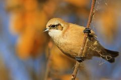Pájaro lindo hermoso en un día soleado del otoño Foto de archivo libre de regalías