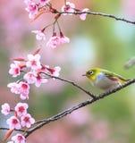 Pájaro lindo que se sienta en rama de árbol del flor Fotografía de archivo