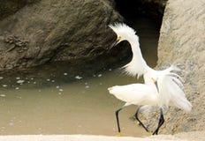 Pájaro loco en la playa Fotografía de archivo