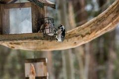 Pájaro macro Fotografía de archivo