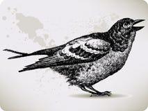 Pájaro, mano-gráfico. Fotos de archivo