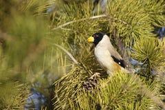 Pájaro masculino Imagenes de archivo