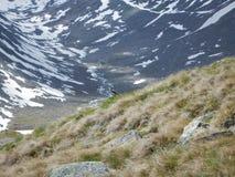 Pájaro minúsculo en un prado de la montaña Fotos de archivo libres de regalías