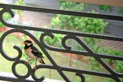 Pájaro mojado en el pasamano Fotografía de archivo libre de regalías