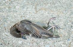 Pájaro muerto Imágenes de archivo libres de regalías
