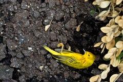 Pájaro muerto Imagen de archivo libre de regalías