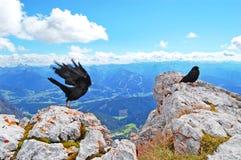 Pájaro negro en la cima del mundo, belleza de la naturaleza, paisaje alpino azul, cielo azul, picos de montaña nevados imagen de archivo