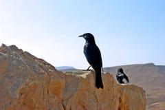Pájaro negro en un fondo de montañas abandonadas Foto de archivo