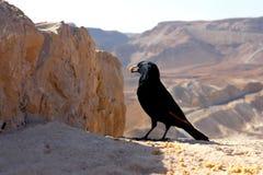 Pájaro negro en un fondo de montañas abandonadas Imagen de archivo