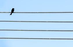 Pájaro negro solo Imagenes de archivo