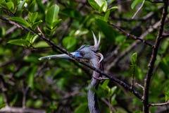 Pájaro no identificado con penachos foto de archivo libre de regalías