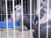 Pájaro no identificado en una jaula Foto de archivo