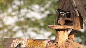 Pájaro (petirrojo oriental de la urraca) en casa de madera de la muestra y del pájaro