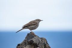 Pájaro Plantas y animales en Tenerife Fotografía de archivo libre de regalías