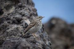 Pájaro Plantas y animales en Tenerife Foto de archivo libre de regalías