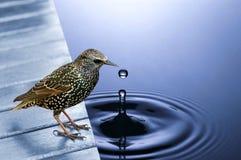 Pájaro por el agua azul fotografía de archivo libre de regalías
