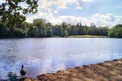 Pájaro por el lago fotografía de archivo libre de regalías