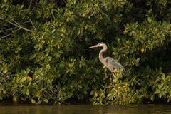 Pájaro por el río fotos de archivo libres de regalías