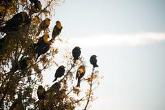 Pájaro principal amarillo Fotografía de archivo libre de regalías