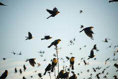 Pájaro principal amarillo Foto de archivo