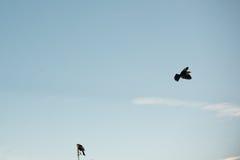 Pájaro principal amarillo Imágenes de archivo libres de regalías