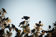 Pájaro principal amarillo Fotografía de archivo