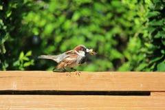 Pájaro que come el insecto Imagen de archivo