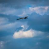 Pájaro que consigue listo para zambullirse en el agua que busca un poco de comida foto de archivo libre de regalías