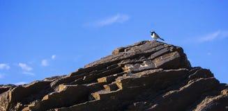 Pájaro que descansa sobre una roca Imagenes de archivo
