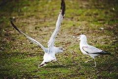 Pájaro que habla Fotografía de archivo