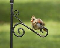 Pájaro que sacude plumas apagado Imagenes de archivo
