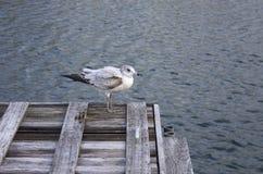 Pájaro que se coloca en muelle Imagen de archivo libre de regalías