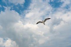 Pájaro que se desliza en el cielo azul Fotos de archivo libres de regalías