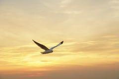 Pájaro que se desliza en la nube en la puesta del sol Fotos de archivo libres de regalías