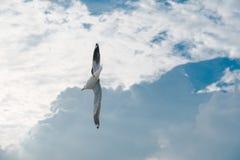Pájaro que se desliza en la nube y el cielo Fotos de archivo