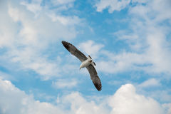 Pájaro que se desliza en la nube y el cielo Imagen de archivo