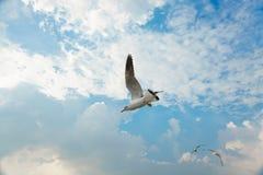Pájaro que se desliza en la nube y el cielo Foto de archivo