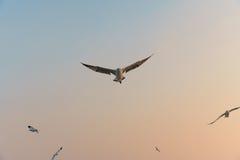 Pájaro que se desliza en la puesta del sol Foto de archivo libre de regalías