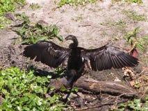 Pájaro que se seca apagado imágenes de archivo libres de regalías
