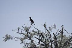 Pájaro que se sienta en árbol muerto Fotos de archivo