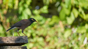 Pájaro que se sienta en la barra transversal Imagen de archivo libre de regalías